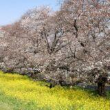 Gå foråret i møde med en japansk miljøvenlige totem taske i smukke farver