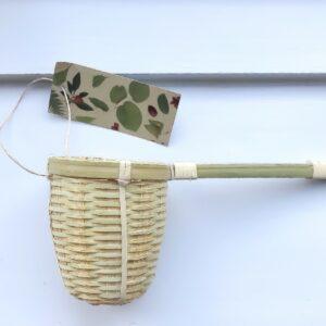 bambus tesi
