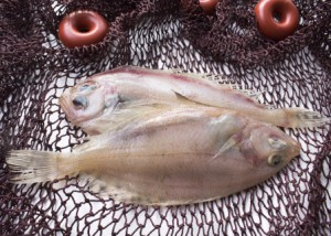 Hvilken type fisk kan bruges til sushi?