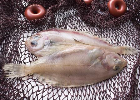 Kan alle typer fisk bruges til sushi?