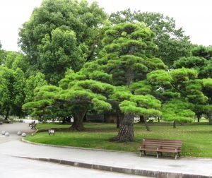 Smukke japanske træer i Tokyo